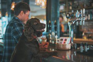 dog at the bar